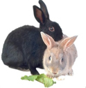 Care and Feeding of Rabbits