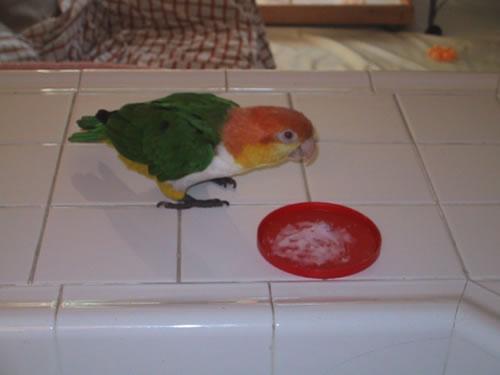 Avian_behavior