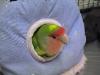 Nesting_behavior.01_fs
