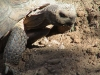 Tortoises_022_fs